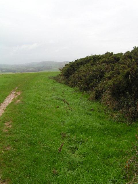 Brenscombe Heath
