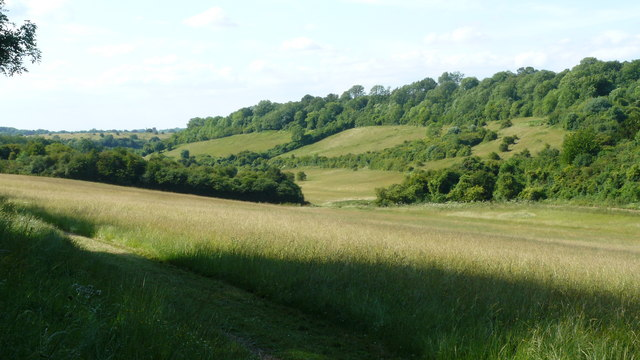 Happy Valley, Surrey - geograph.org.uk - 1387671