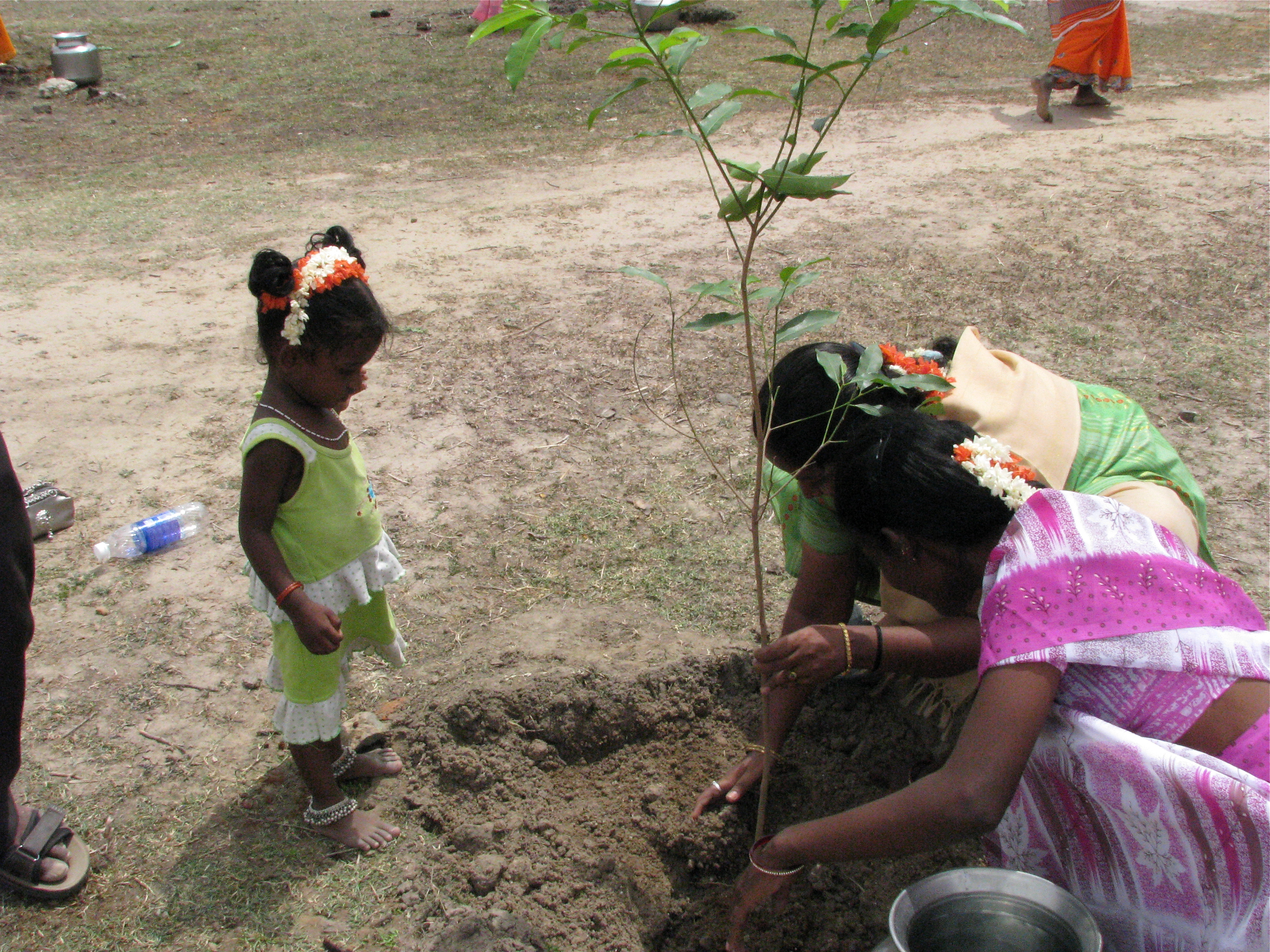 Image result for planting trees