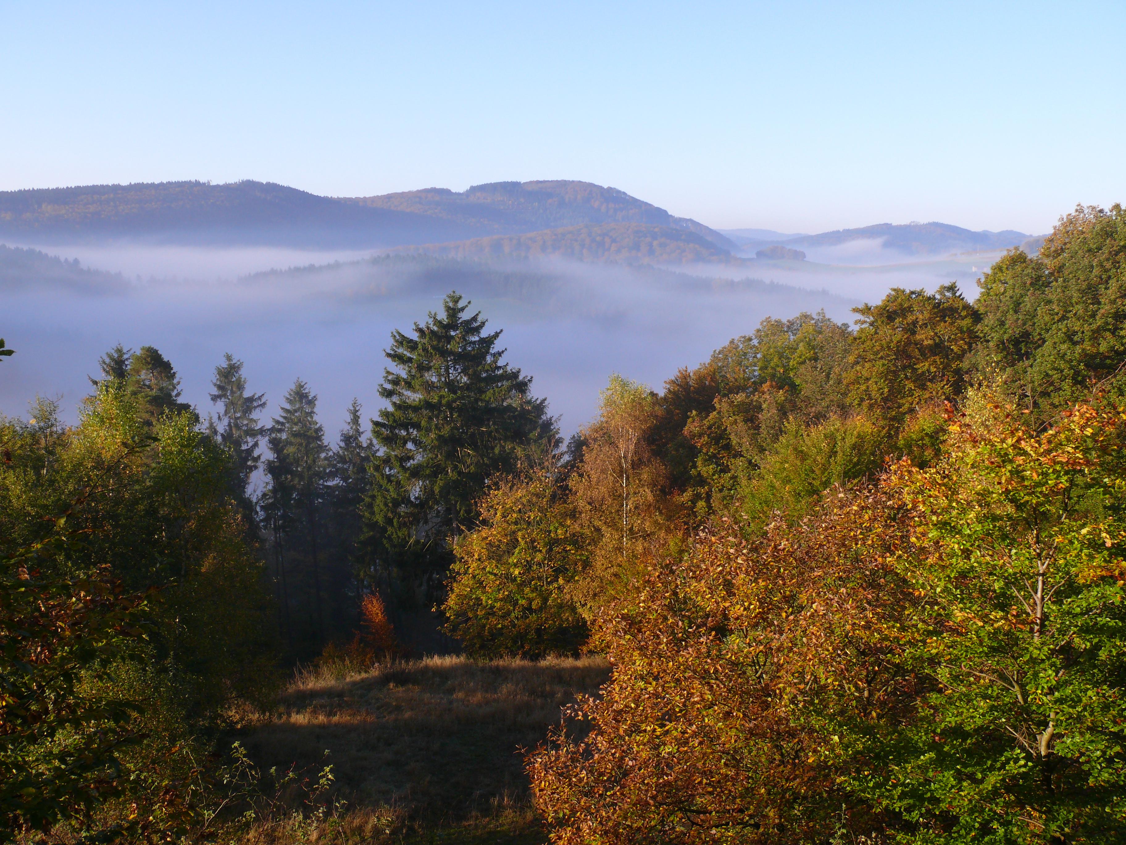 Mischwald im Sauerland zur Herbstzeit. Deutschland befindet sich in einer gemäßigten Klimazone.