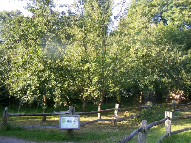 Kentish Orchard in High Elms Country Park - geograph.org.uk - 994679