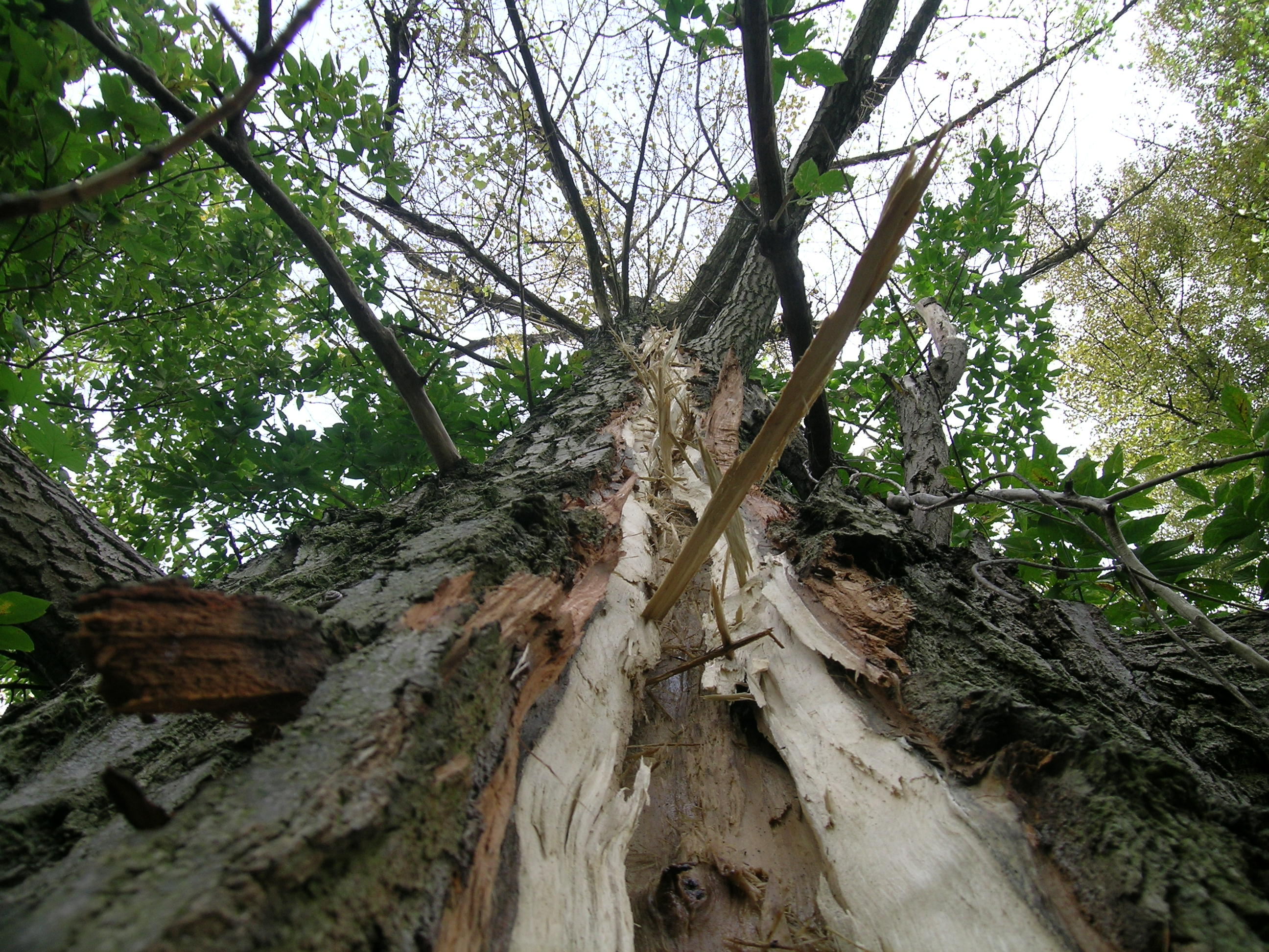 Image Result For House By Trees