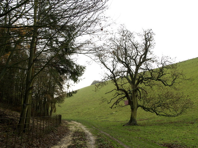 File:Oxlands Dale Footpath - geograph.org.uk - 617100.jpg