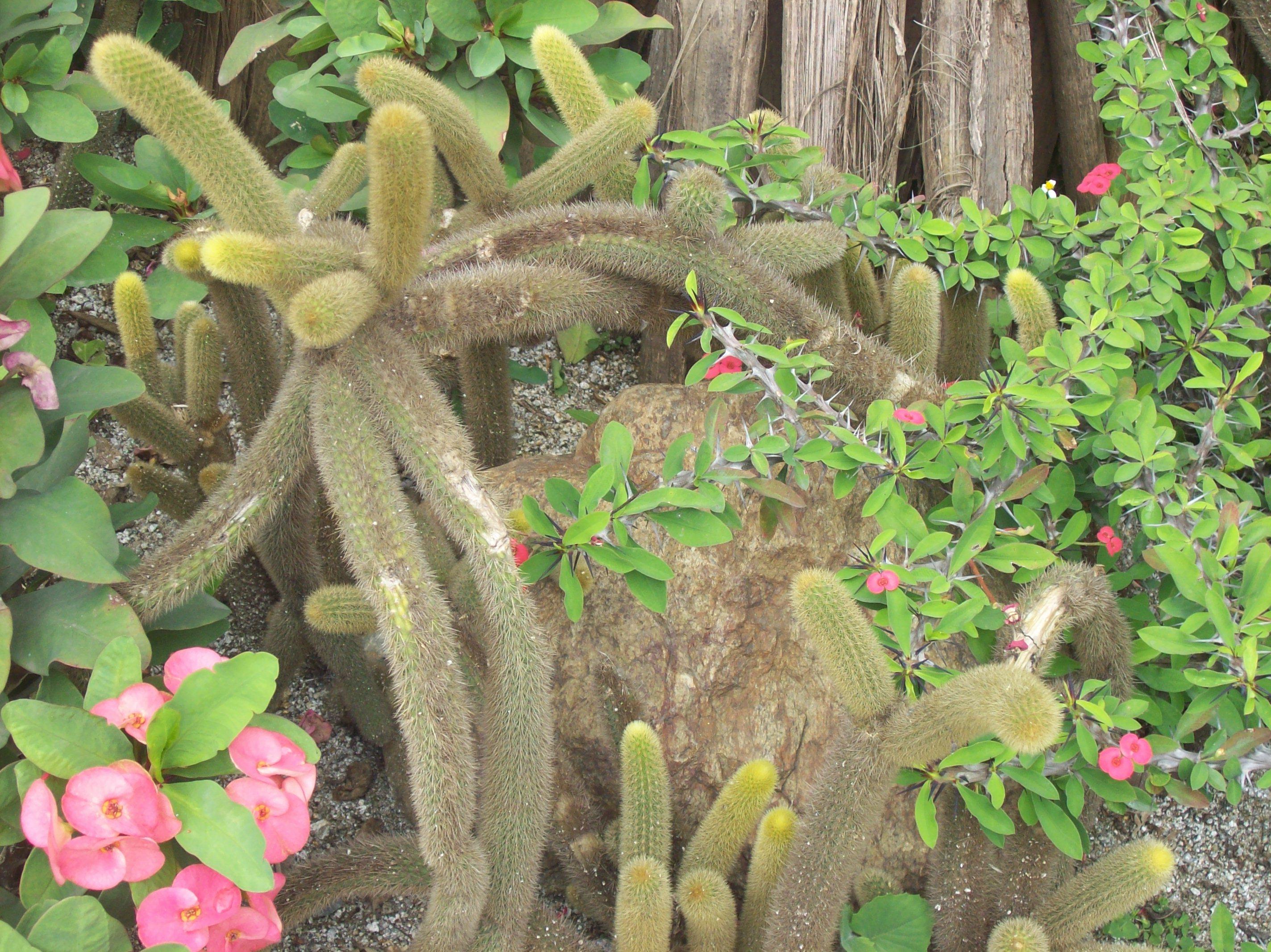 File plantas jard n bot nico de medell n jpg wikimedia - Planta de jardin ...