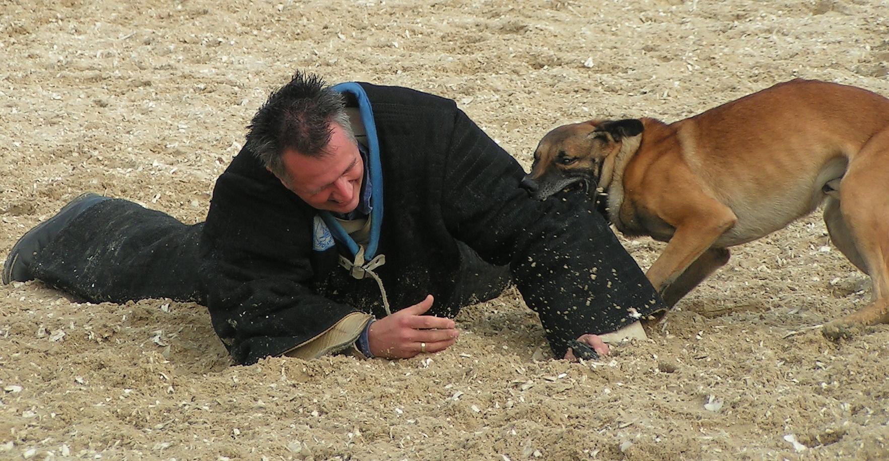 Training Dog According To Nancy Baer And Steve Duno