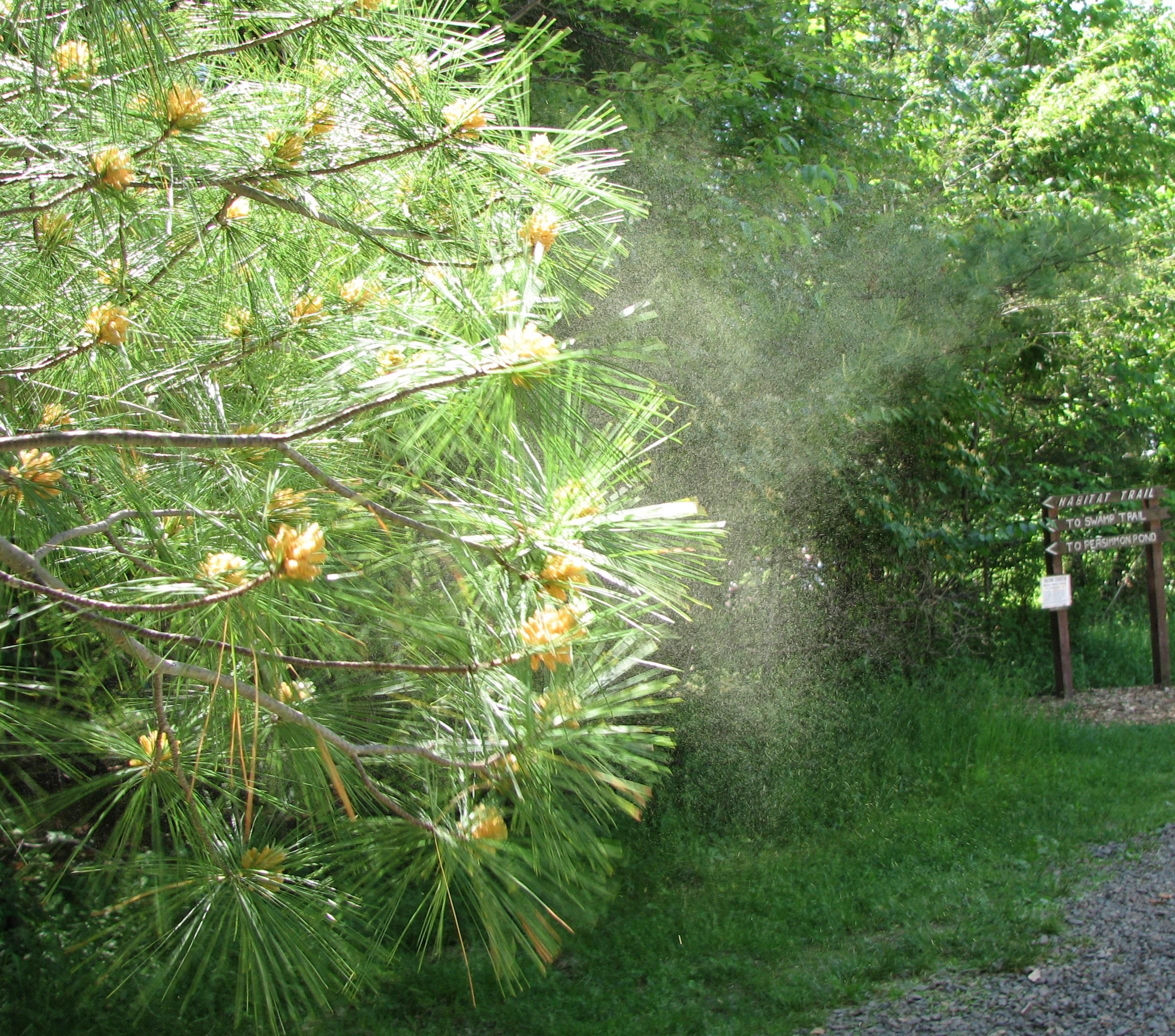 Pollination - Simple English Wikipedia, the free encyclopedia