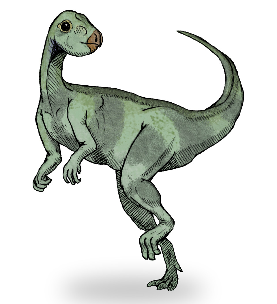 Depiction of Qantassaurus
