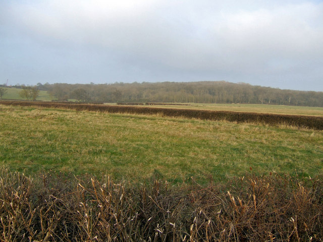 Rough Copse - geograph.org.uk - 637516