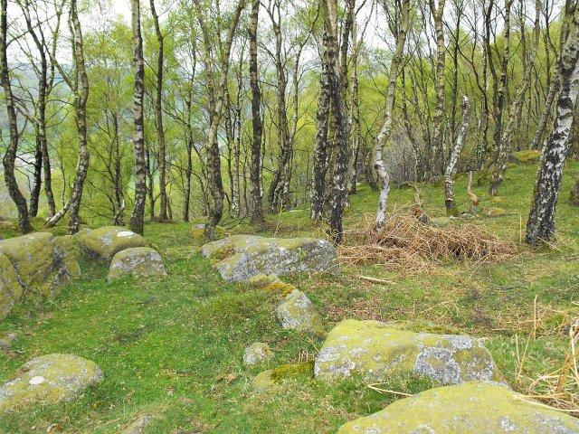 Silver birch on Froggatt Edge - geograph.org.uk - 1282049