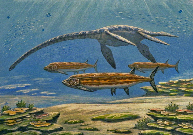 File:Styxosaurus and Xiphactinus.jpg - Wikimedia Commons