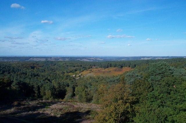 Surrey north downs