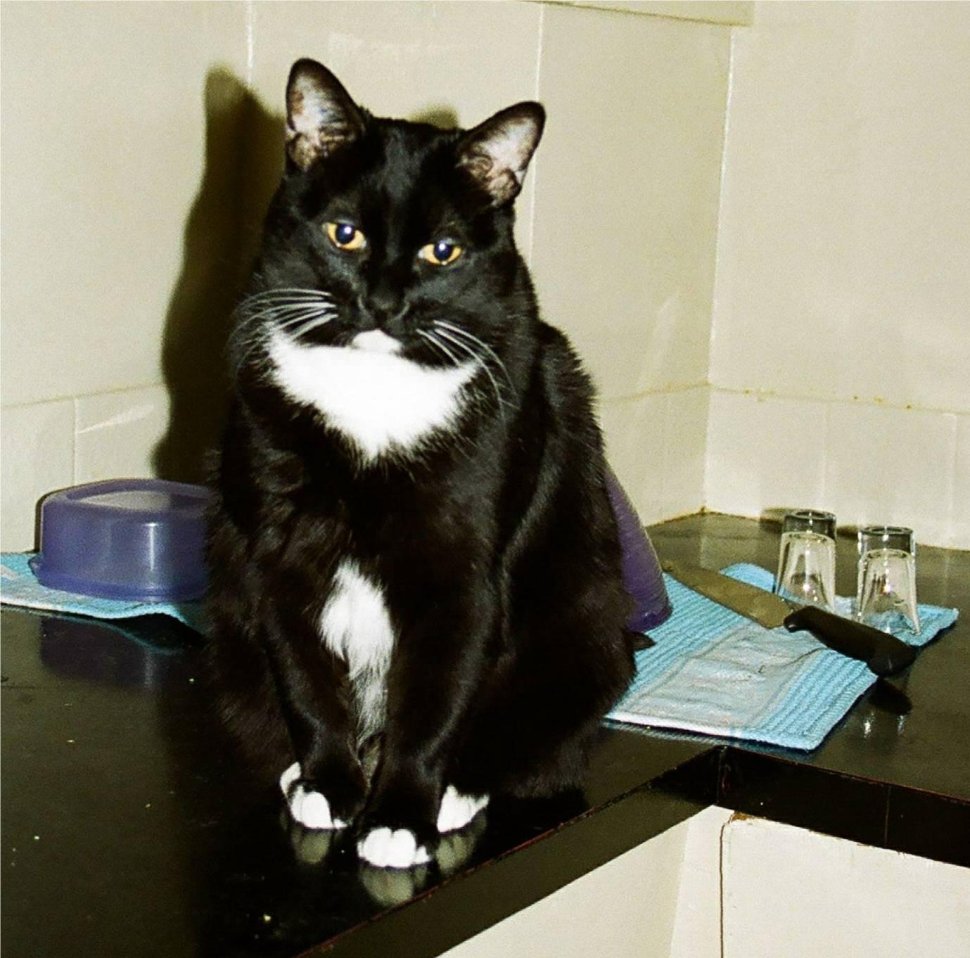 cat adoption canton ohio