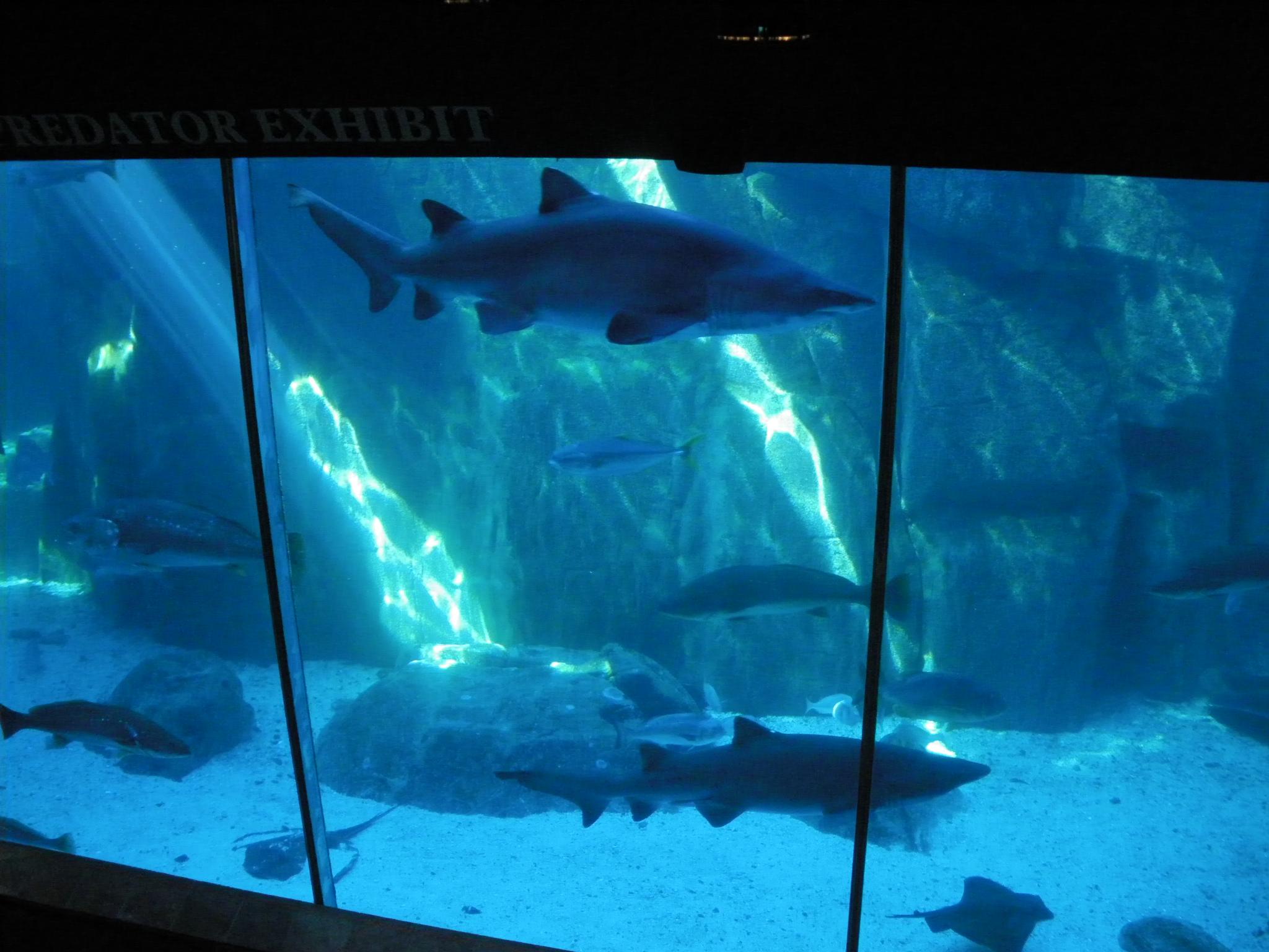 Two Oceans Aquarium Cape Town : File:Two Oceans Aquarium05.jpg - Wikimedia Commons