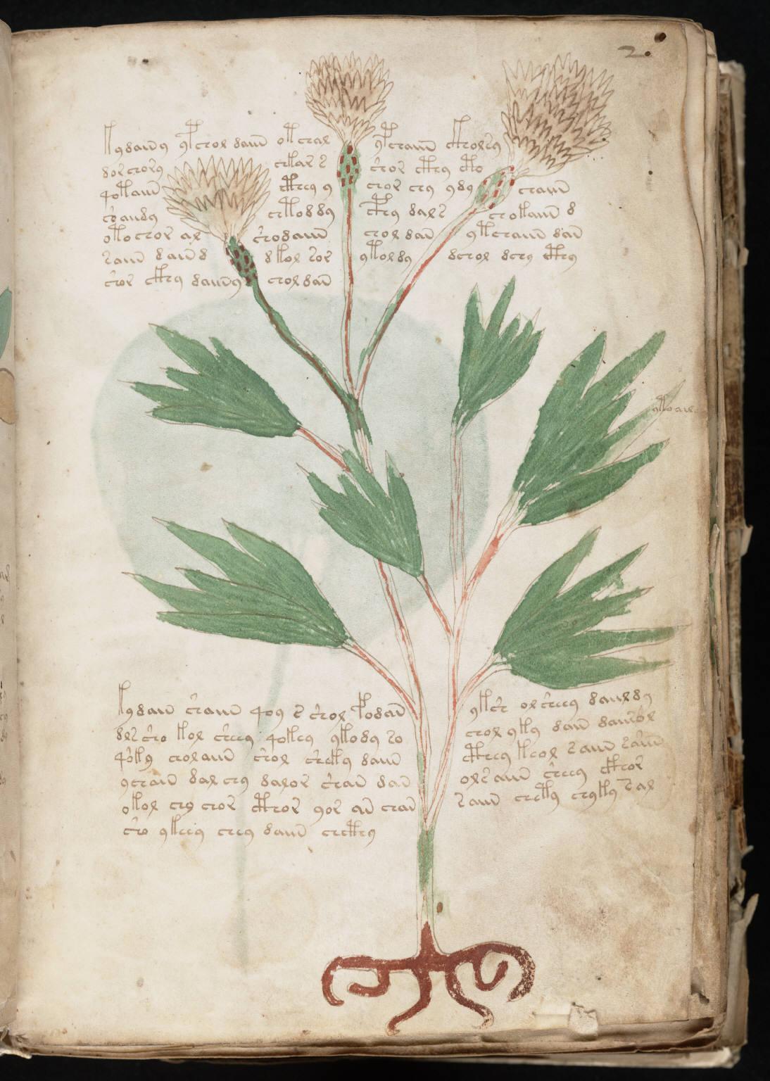 Manuscrit de Voynich  Wikipédia