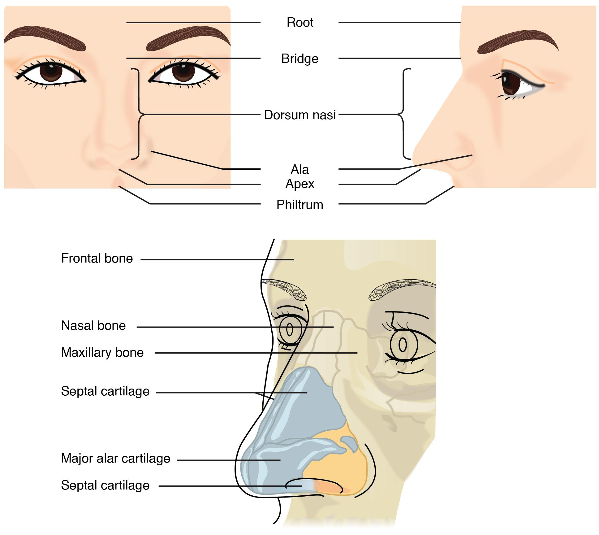 2302_External_Nose
