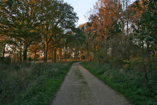 A walk through Twyford Wood, No 12 - geograph.org.uk - 272136
