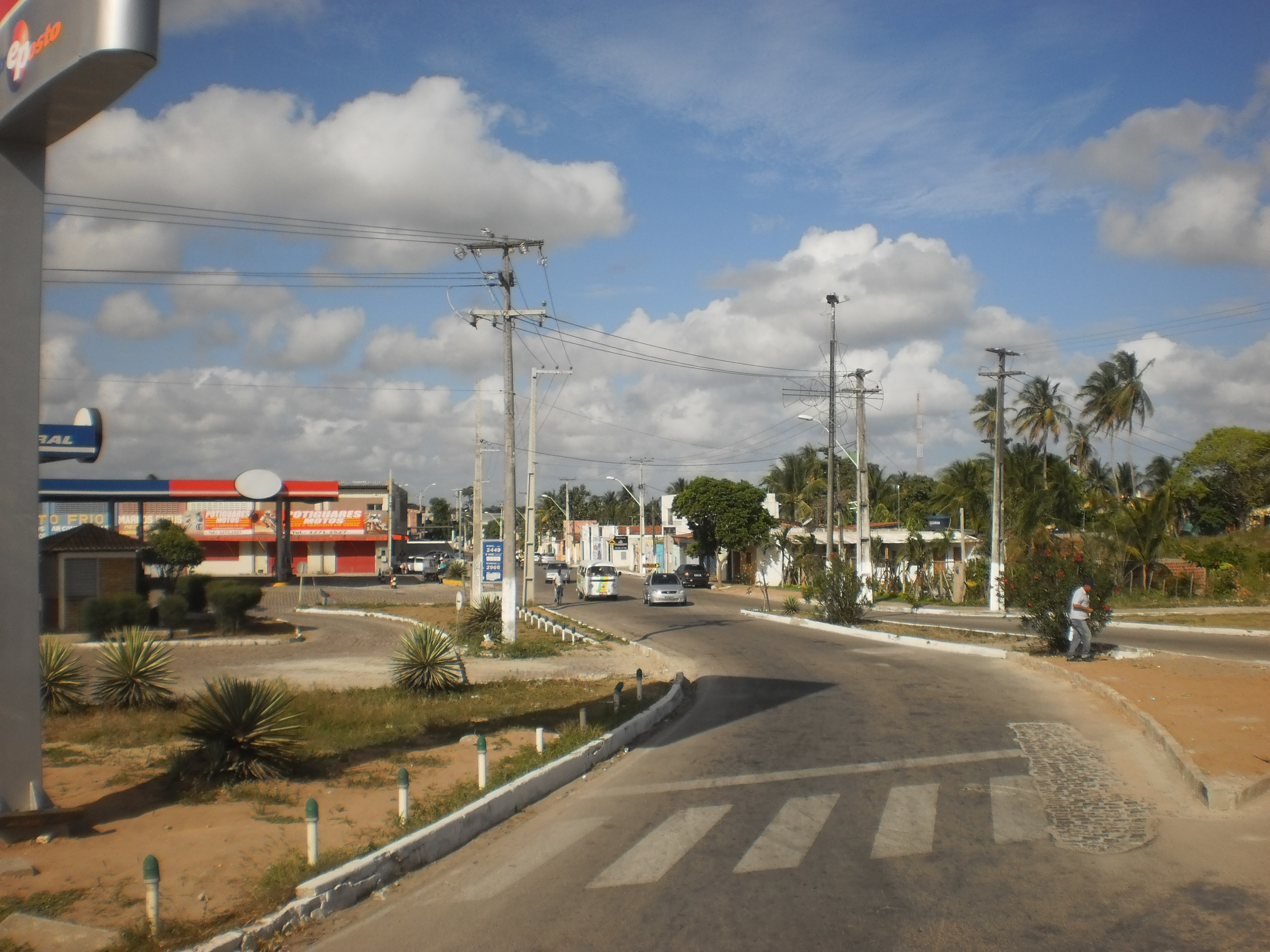 Resultado de imagem para Macaíba