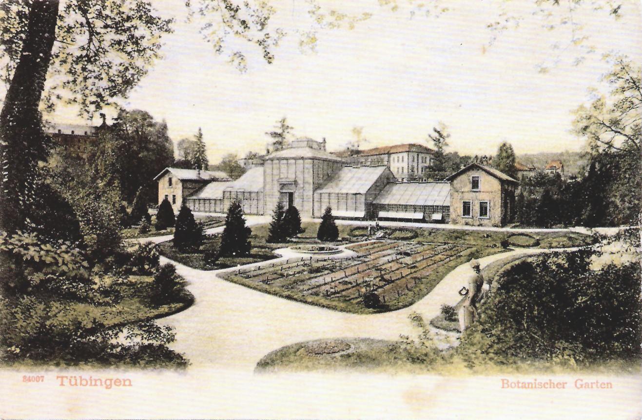 File Botanischer Garten Tubingen Ak Gebr Metz 1916 Tpk098 Jpg Wikimedia Commons