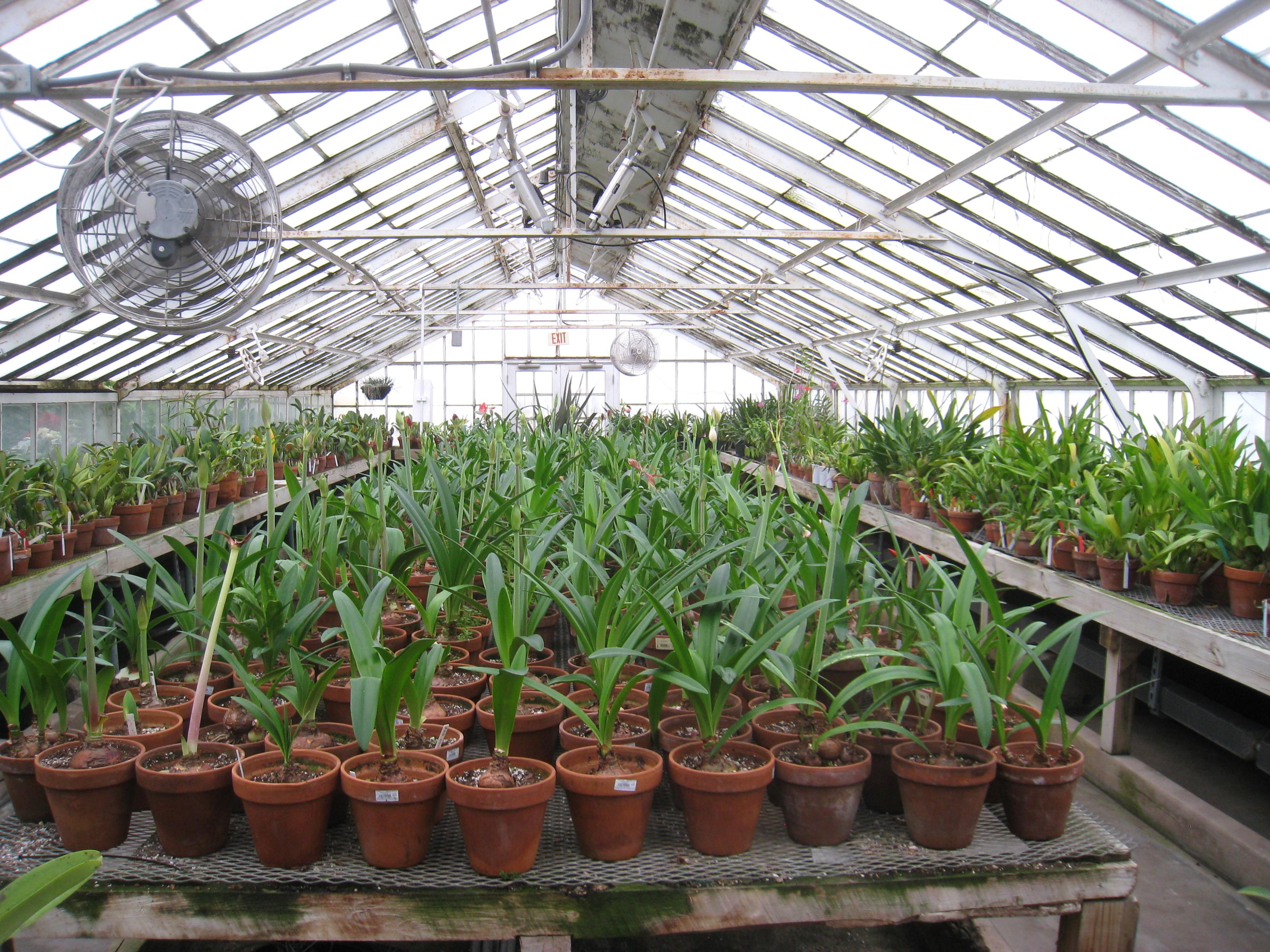 File Buffalo And Erie County Botanical Gardens 1 10