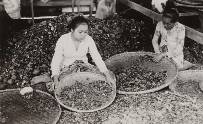 omensortingdammarseedsinest-reanger,ava.1936