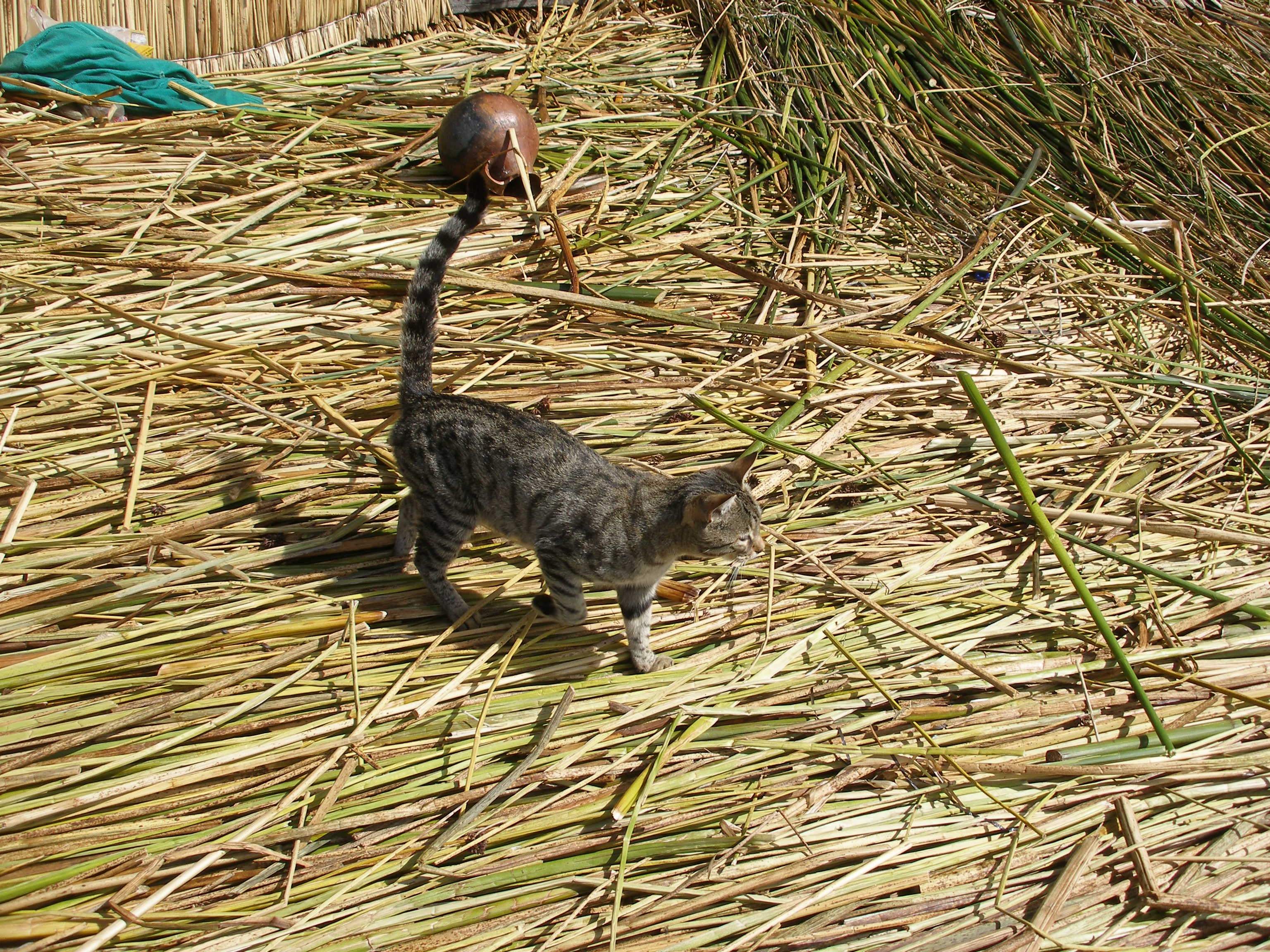The floating islands of lake titicaca business insider for Cat goes fishing wiki