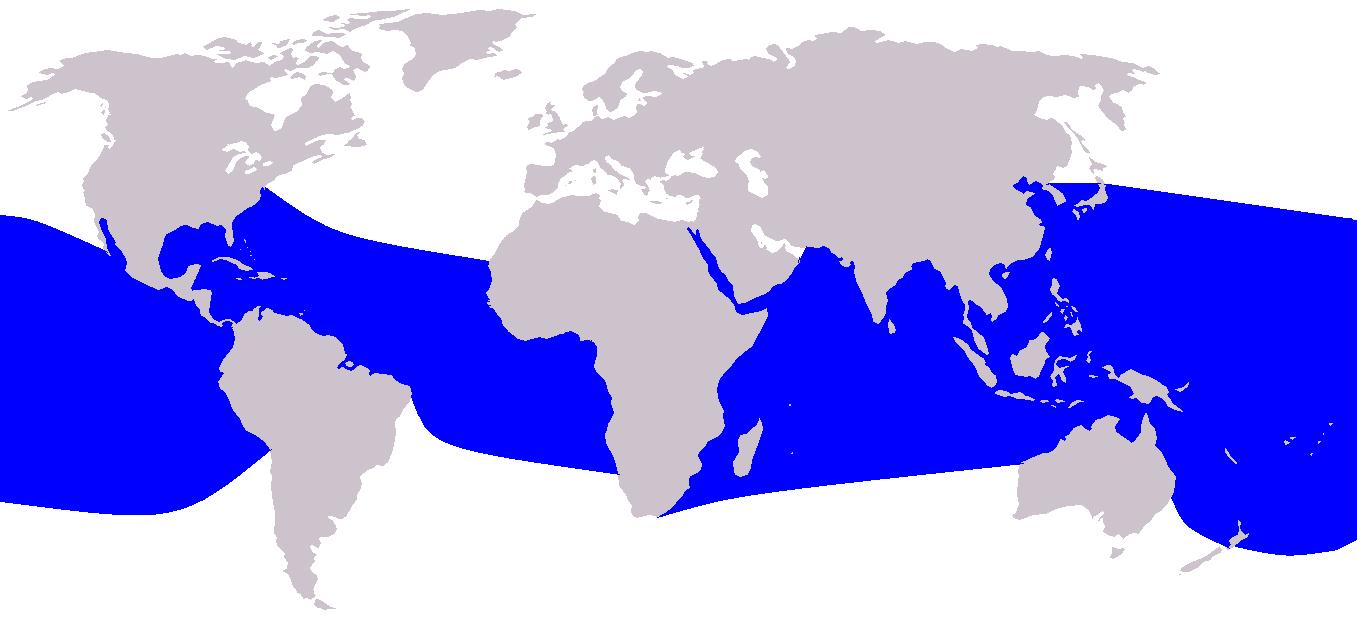 Ostpazifische Delfin / Spinnerdelfin - Stenella longirostris karte verbreitung vorkommen lebensraum