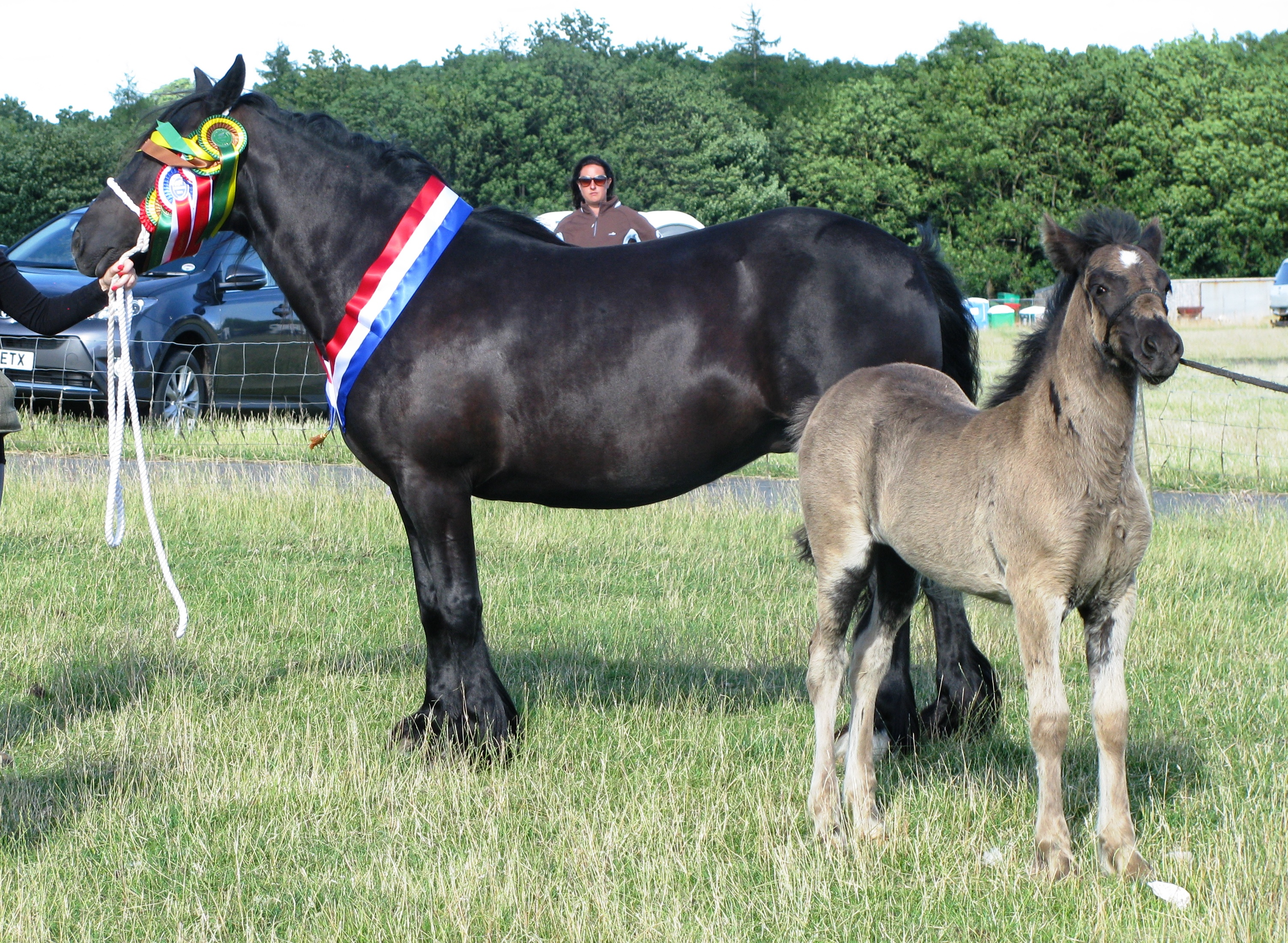 history and overview of the horse breeds history essay Horse is a majestic animal which has been domesticated more than 7000 years ago and has spread all over the word during the last 5000 years.