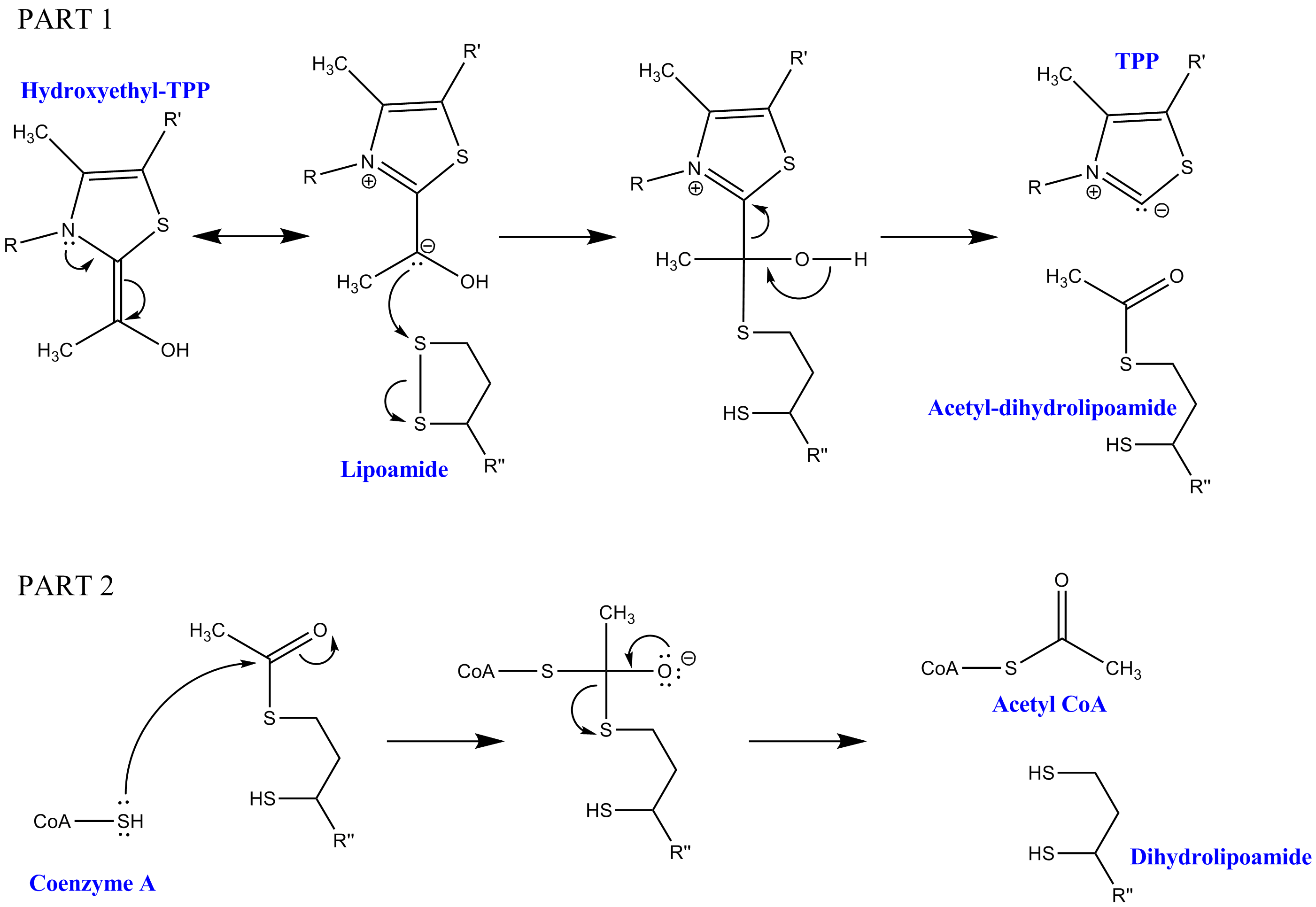 subunit structure of dihydrolipoyl transacetylase Protein quaternary structure: in particular with respect to the types of subunit–subunit interactions giving rise to dihydrolipoyl transacetylase.