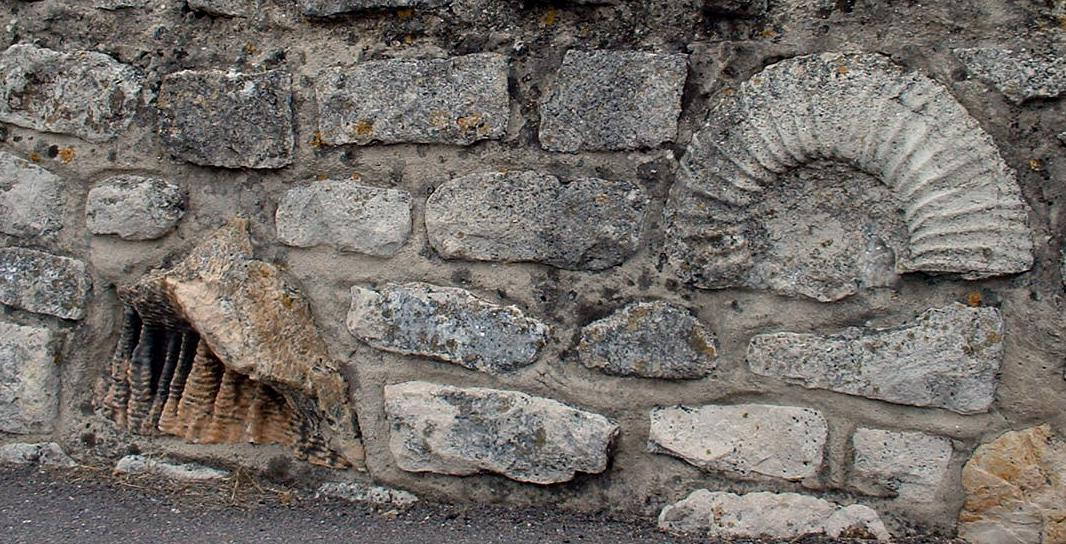 File Dorset Portland Wall Fossils Jpg Wikimedia Commons