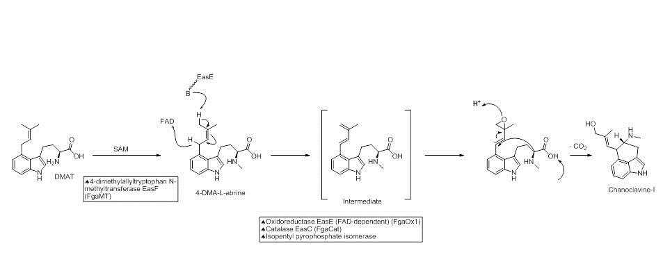 Fig2- ergot alkaloid biosynthesis.jpg