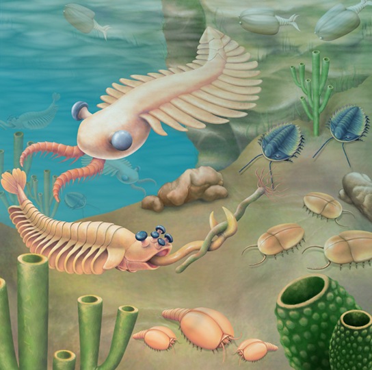 Cambrian Explosion lead to new creatures