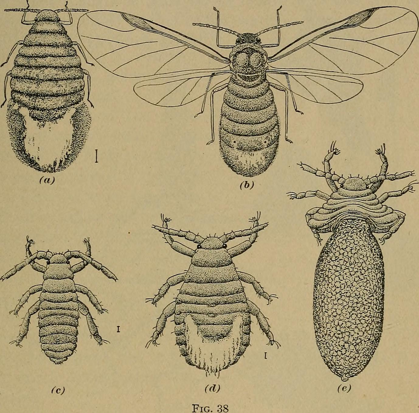 File:Fruit culture (1912) (14782031622) jpg - Wikimedia Commons
