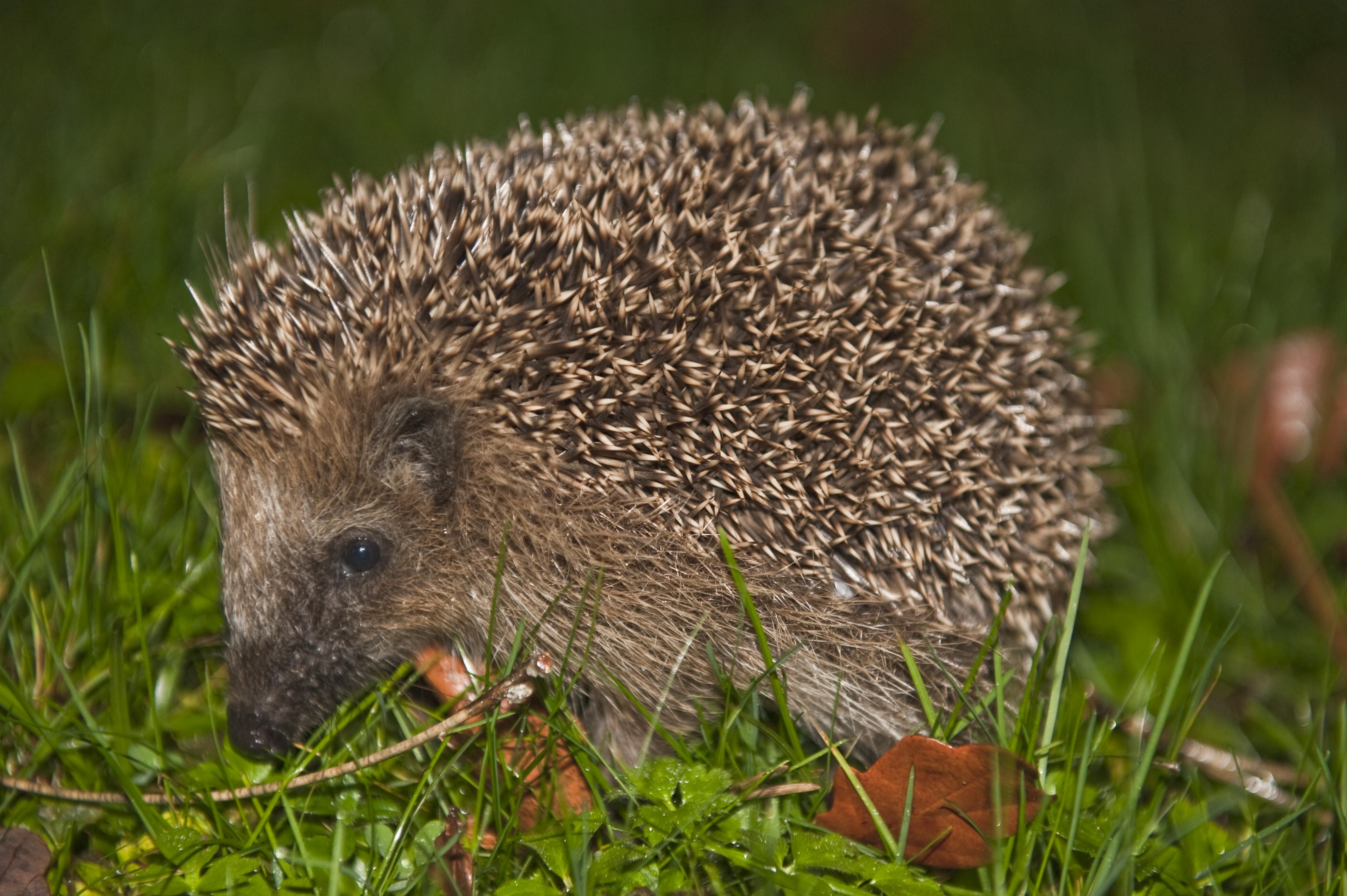 Listă Animale Sălbatice România Mamiferele Care Populează