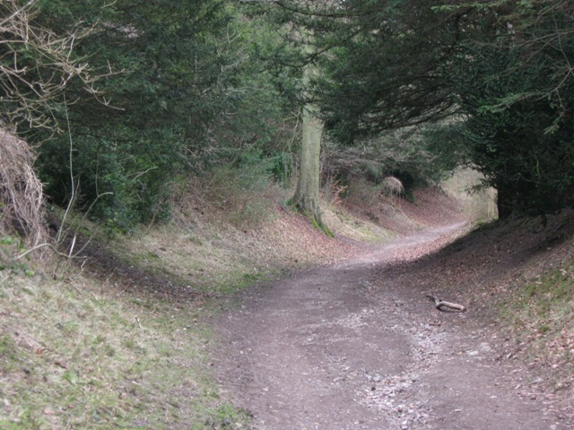 Holloway in Wendover Woods - geograph.org.uk - 1180570