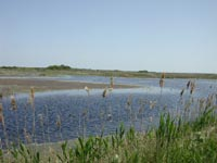 Impoundment at Back Bay NWR.jpg