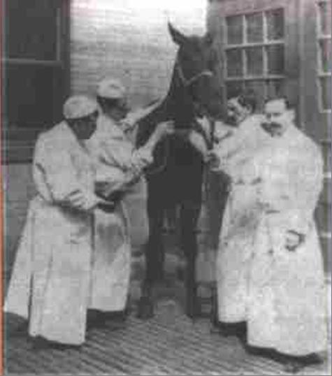 Jim Horse Wikipedia