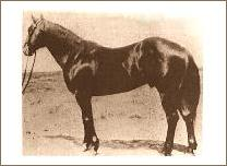 Joe Hancock Quarter Horse stallion and sire