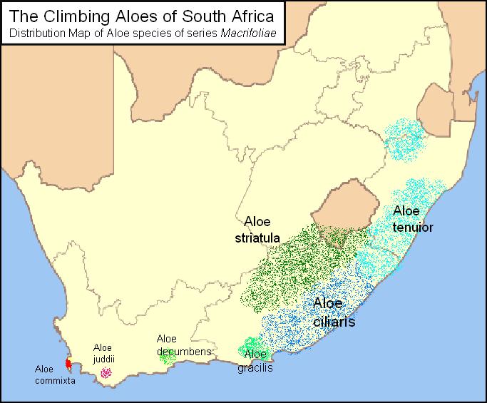 Aloe striatula - Page 2 Map_of_Macrifoliae_Aloes