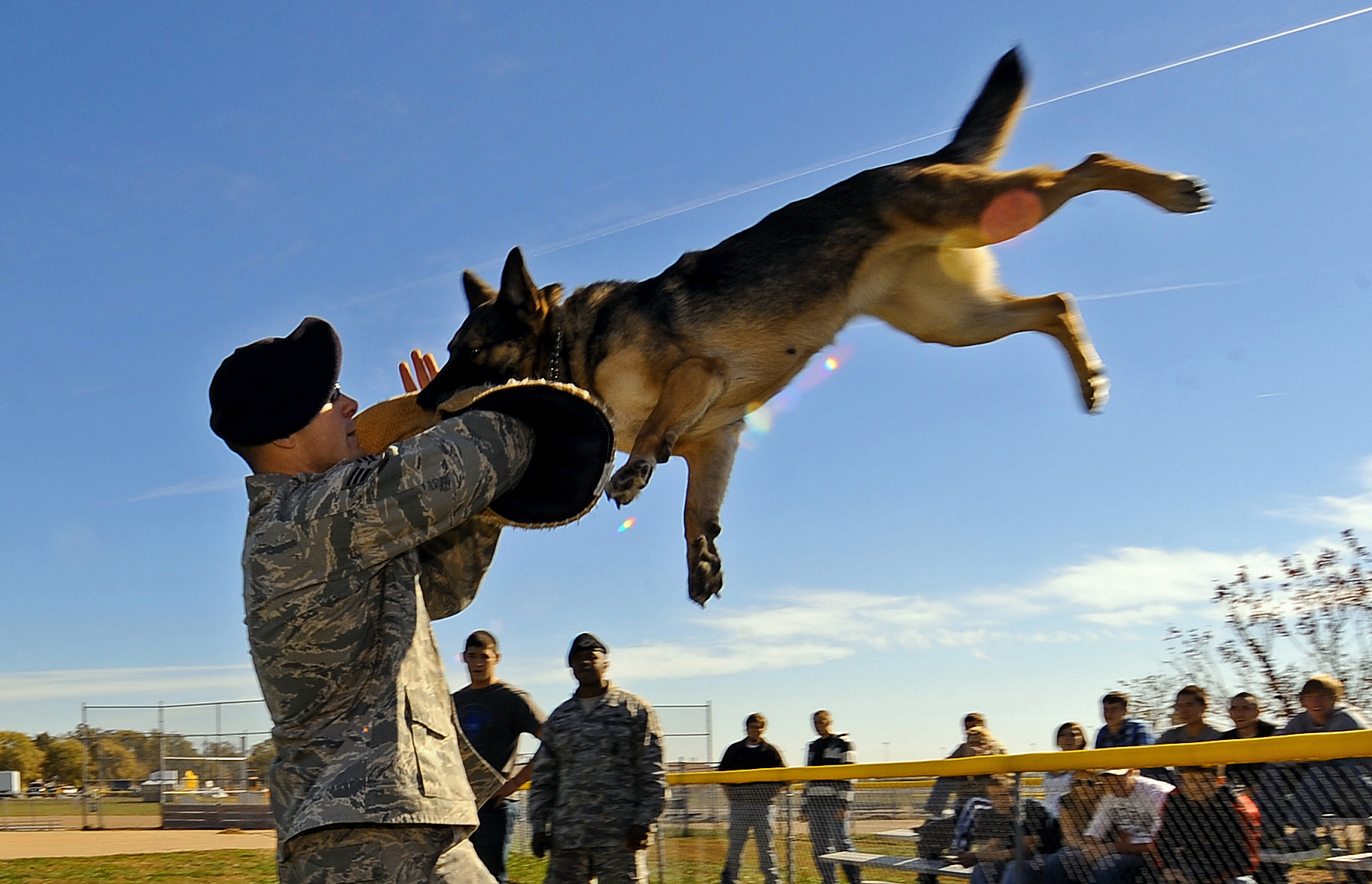 Description military dog handler demonstrates attack dog