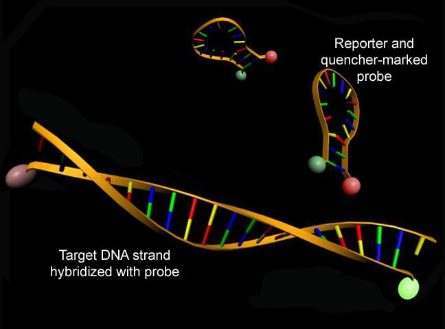 Real Time Pcr. Real time quantitative PCR