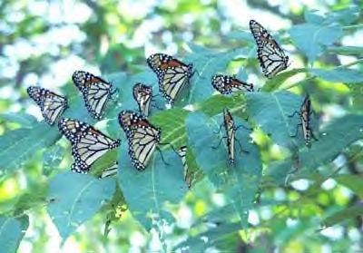 Dating but no butterflies