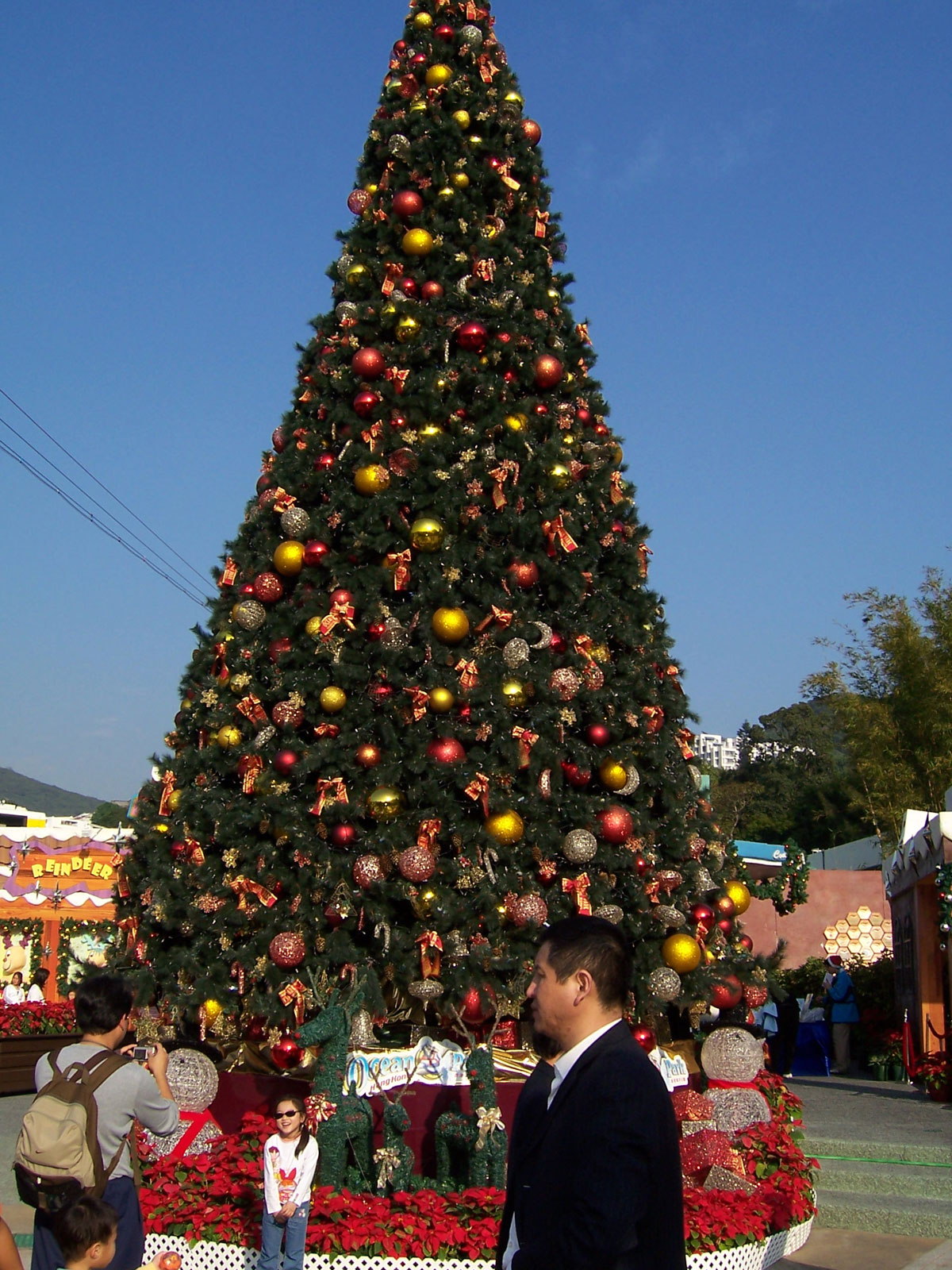 Ocean Park Christmas Tree