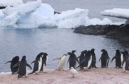 http://upload.wikimedia.org/wikipedia/commons/0/05/Penguins_on_Gourdin_Island.jpg