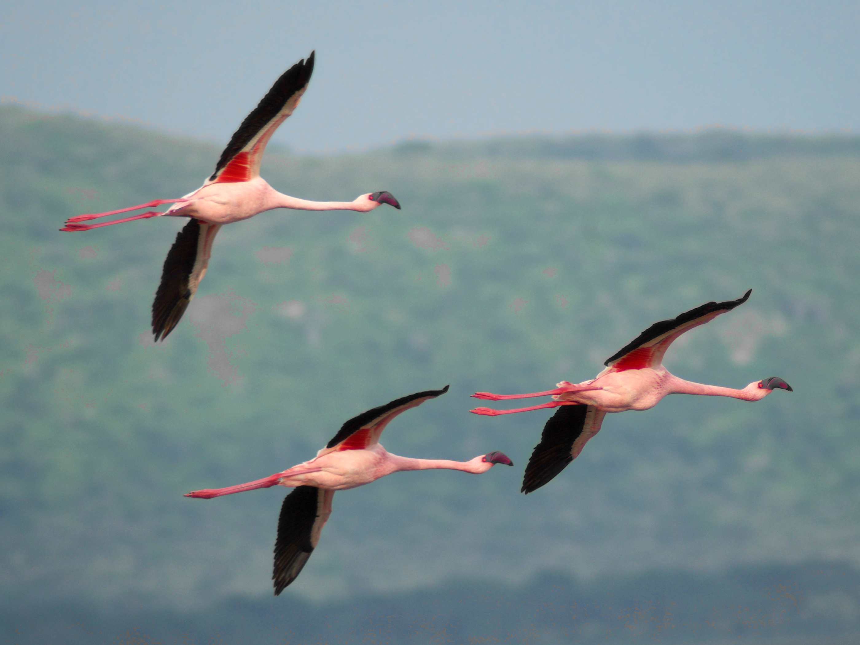 King Size Flamingo Bedding And Sheet Sets