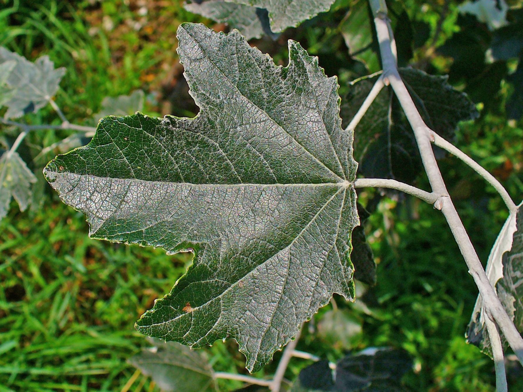 ребенок видит, какие листья у осины фото обид, печали, волнений
