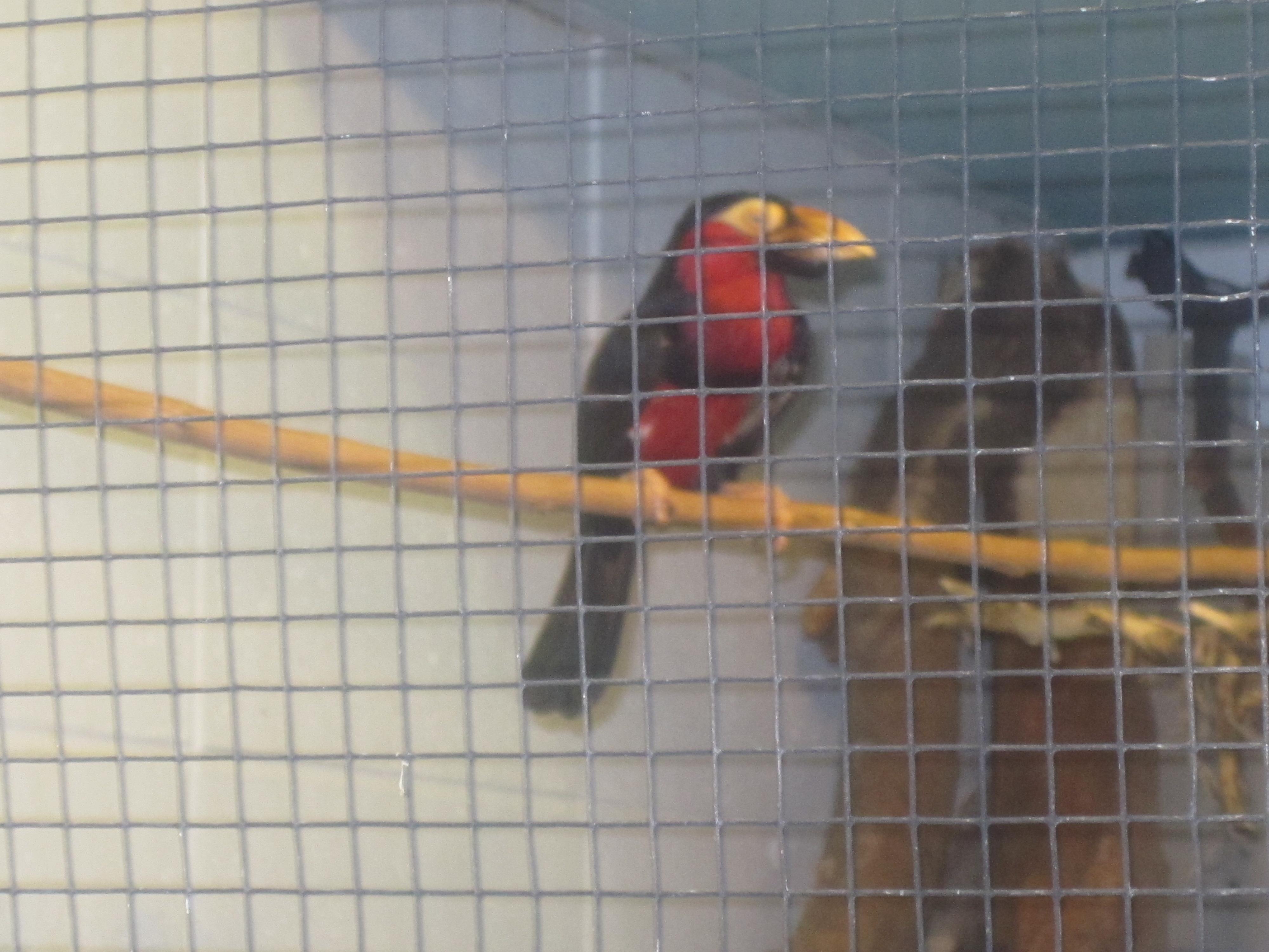 File Rare Bird At Lee Richardson Zoo Garden City Ks Img: garden city zoo