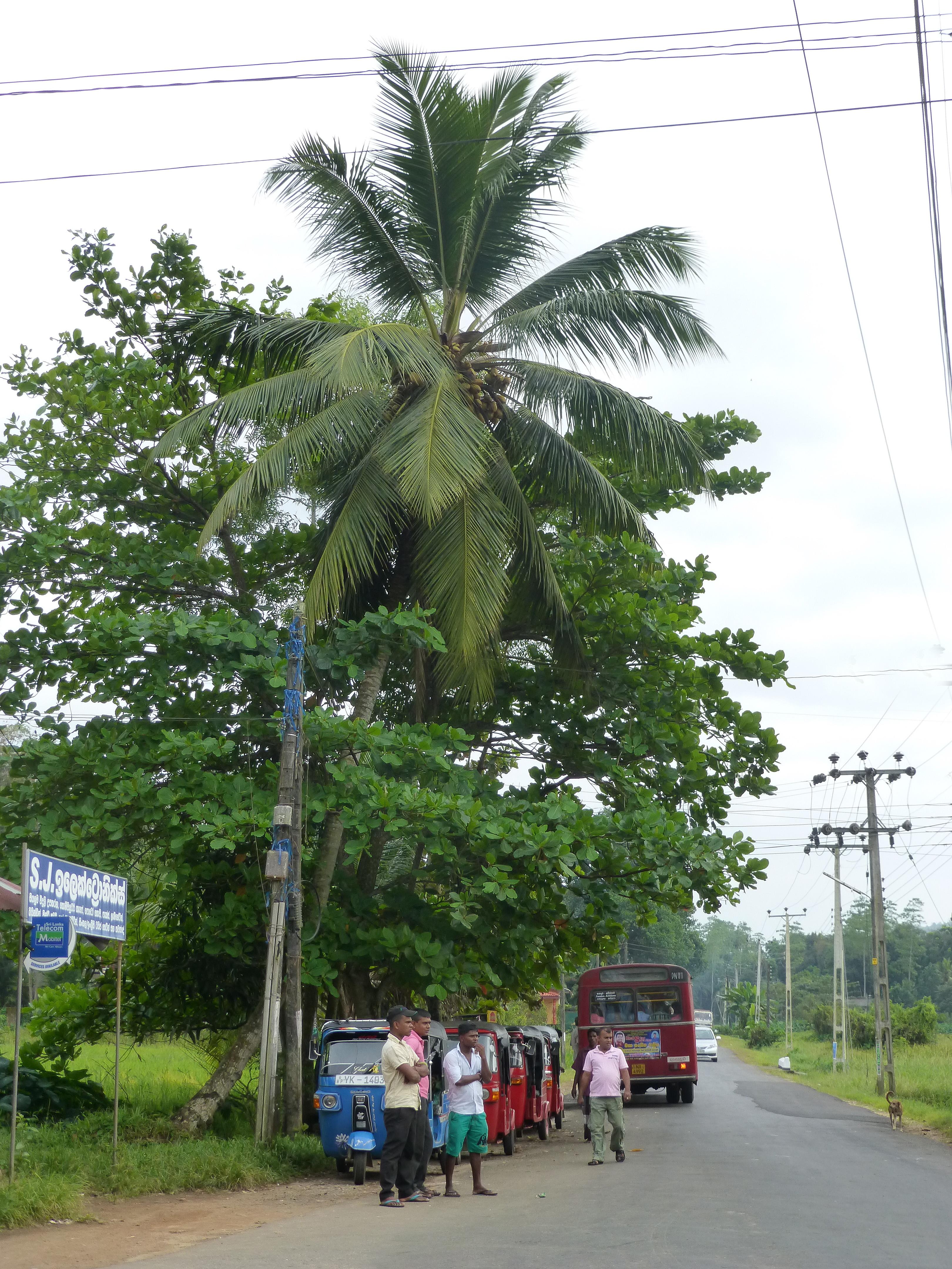 Transport - Sri Lanka