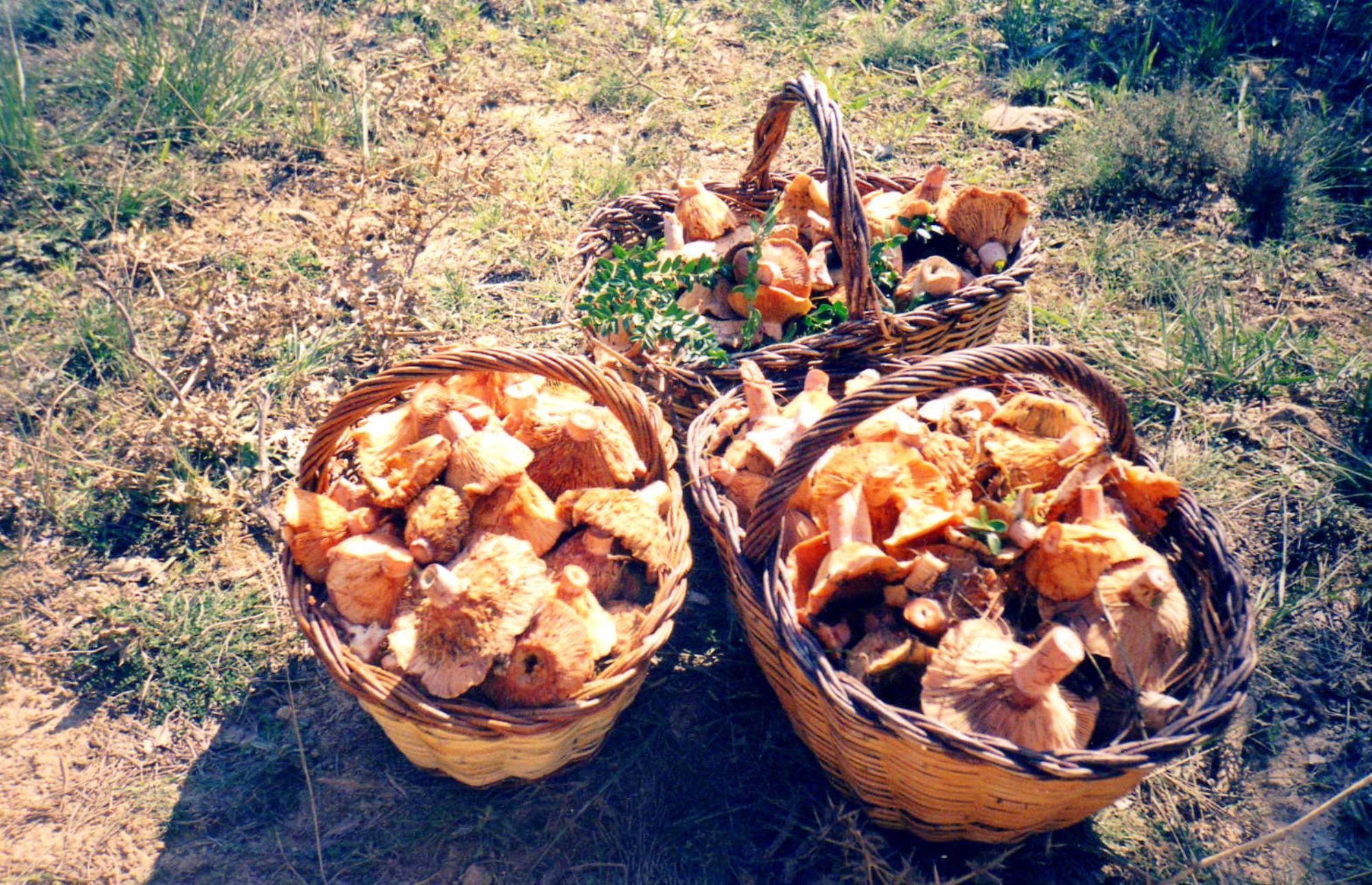 грибы в узбекистане фото