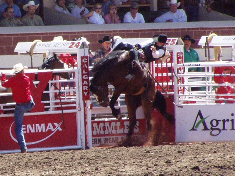 Houston Livestock Show & Rodeo - Attractions/Entertainment, Parks/Recreation - 8334 Fannin Street, Houston, TX, United States