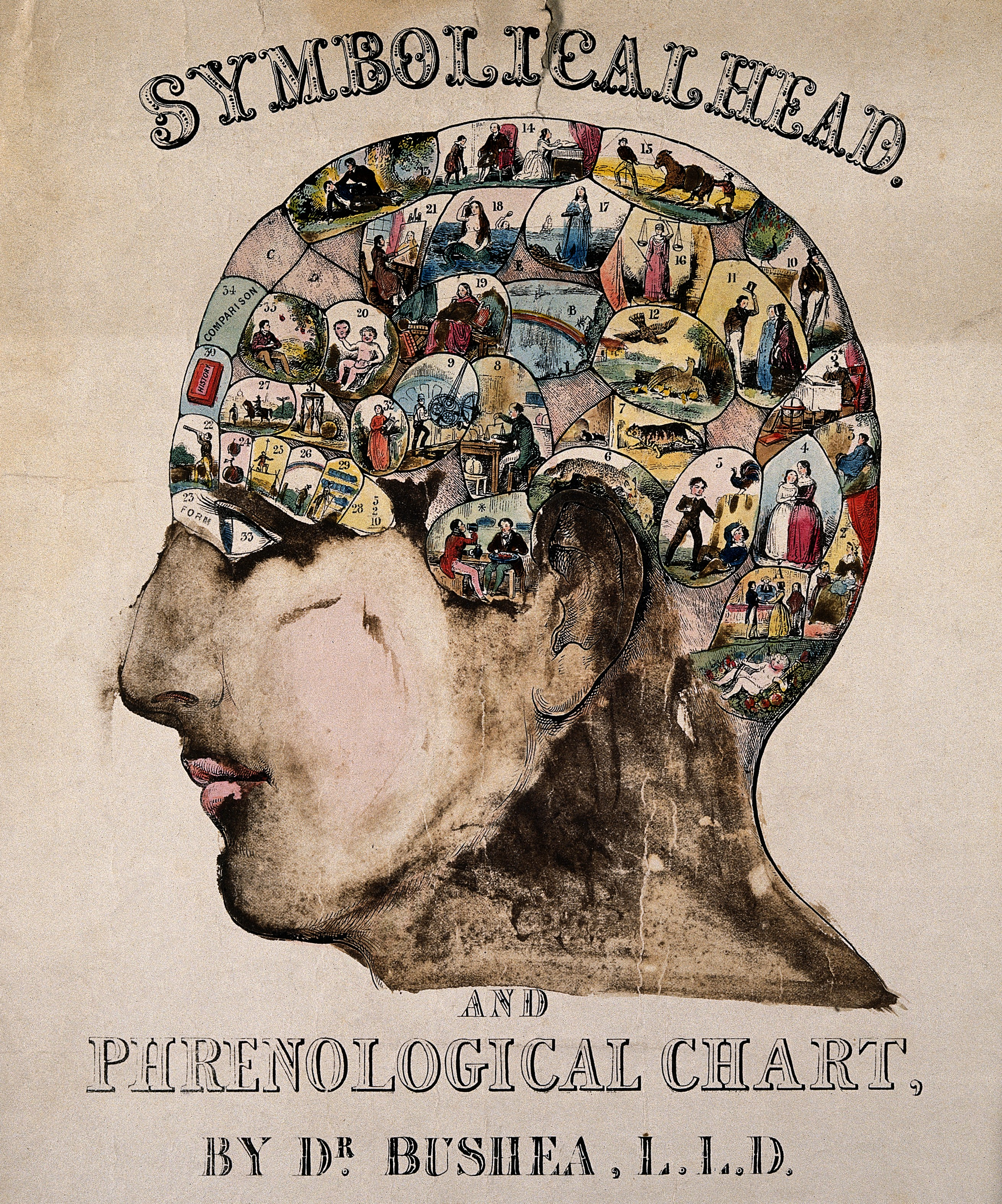 Head Size Conversion Chart: Symbolical head After O S Fowler c.1845 Wellcome V0009493 ,Chart